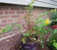 q plant identification and care needed, flowers, gardening, landscape