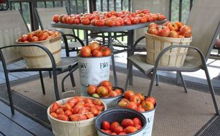 how and why to prune tomatoes for a better crop, gardening, homesteading, how to