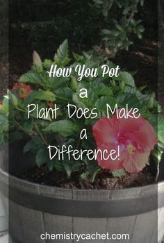 how to pot your plants, container gardening, flowers, gardening, how to, patio