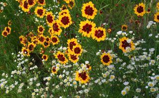 how to build rain gardens, flowers, gardening, how to
