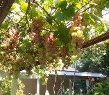 fruit tree pictures, gardening, homesteading