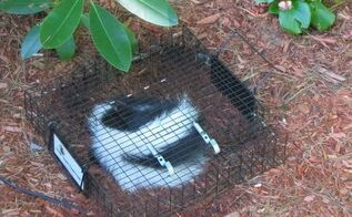 q how to keep skunks away, pets animals