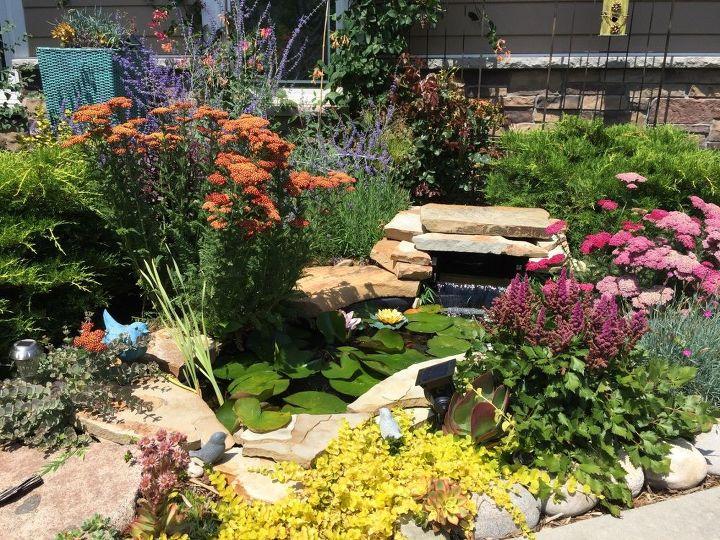 Small garden pond paradise hometalk for Garden pond questions