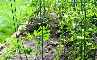 tomato cage plant stand, container gardening, gardening, repurposing upcycling