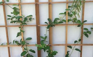 q how to grow trellis vines, gardening