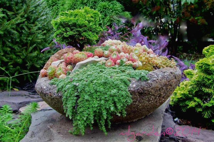 Planting your hypertufa container hometalk - Best compost for flower pots solutions within reach ...