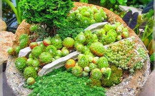 planting hypertufa container, container gardening, flowers, gardening, succulents, Rock Garden in a bowl