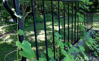railing turned into a garden trellis, gardening, repurposing upcycling