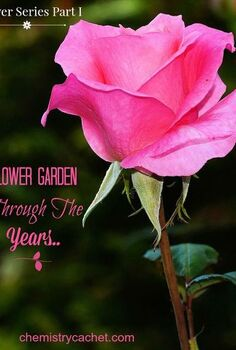 flower garden through the years small apartment to house, flowers, gardening