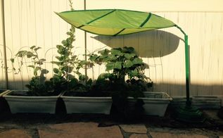 leaf canopy to the rescue, container gardening, gardening