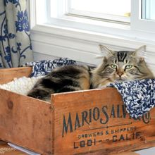 cat bed crate, pets animals, repurposing upcycling