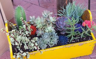 succulents antique toolbox, container gardening, flowers, gardening, repurposing upcycling, succulents