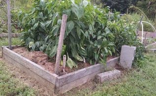 raised bed a super producer, gardening, raised garden beds
