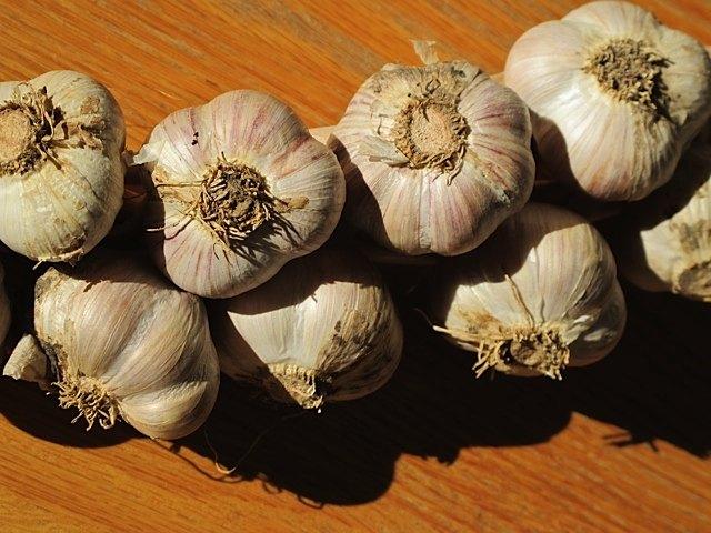 planting garlic in the fall hometalk. Black Bedroom Furniture Sets. Home Design Ideas