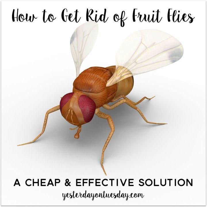 how to get rid of fruit flies hometalk. Black Bedroom Furniture Sets. Home Design Ideas