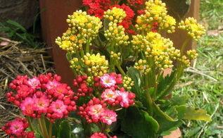 some recent garden photos taken in spring in our back garden, flowers, gardening