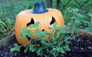 spooktacular garden decor, gardening, halloween decorations, seasonal holiday decor, This little pumpkin is hiding in the oregano