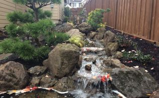 urban japanese garden by ross nw watergardens, gardening, landscape, outdoor living, ponds water features