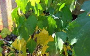 q plant identification id name this plant, gardening, plant id, Plant ID