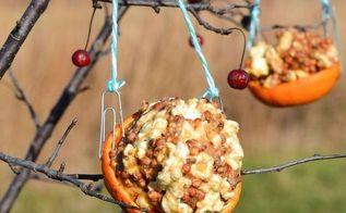 orange peel bird feeder, crafts, outdoor living, pets animals
