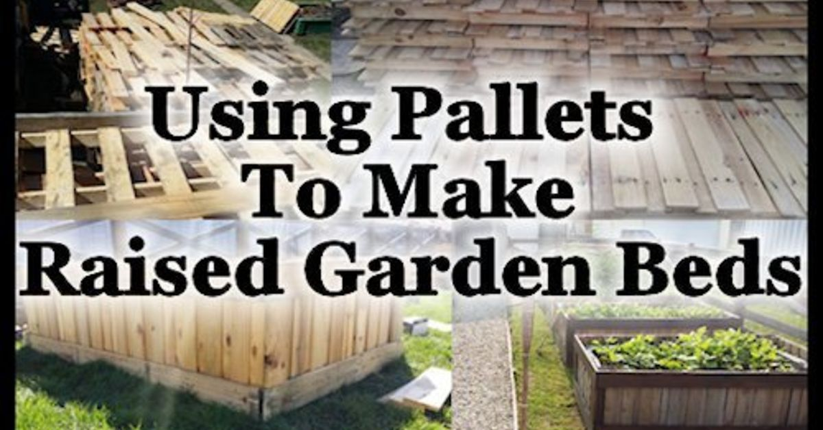 Using pallets to make raised garden beds hometalk for Gardening using pallets