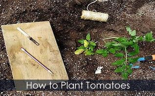 growing tomatoes planting tying caging tips, container gardening, gardening, How to plant tomatoes