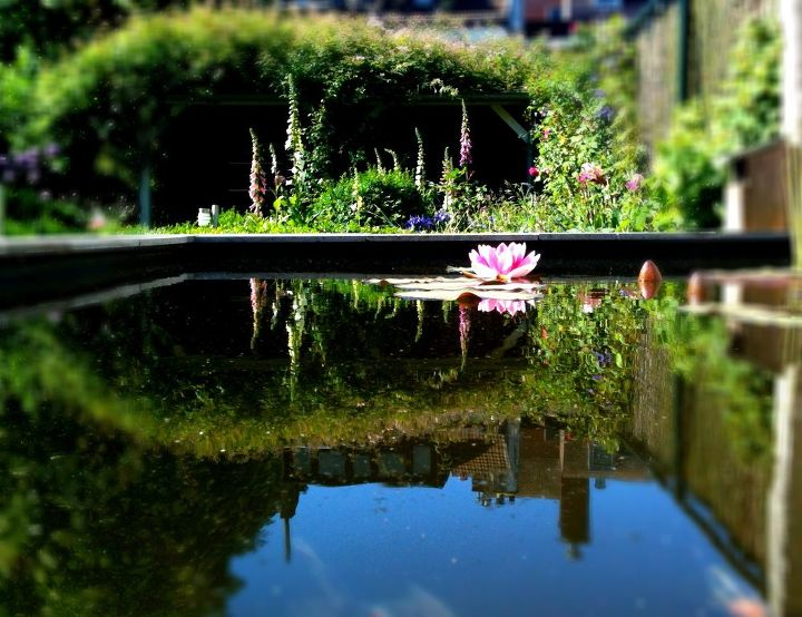 Turning a garden shed into a pond hometalk for Turn pool into koi pond