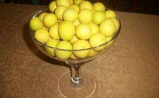 my lemon tree is full of lemons this year, gardening, Lemons from my lemon tree