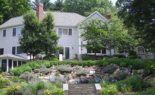 got hill terrace it, flowers, gardening, landscape, perennial, 5th Year Photo Nepeta Blue Wonder Taking Over