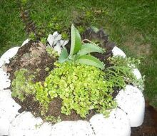 succalents planted in a bird bath made into a planter, curb appeal, gardening, Planter