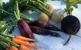 vegetables that are sweeter grown in winter, gardening, Winter Root Vegetables