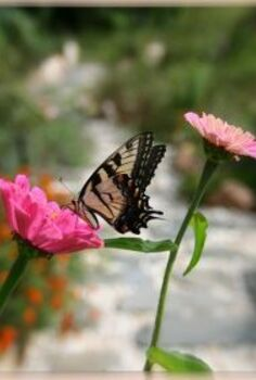 starting a butterfly garden, flowers, gardening, how to