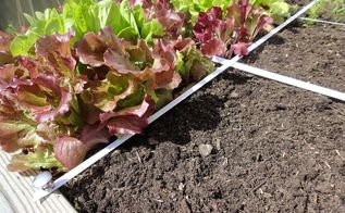 may garden makeover, gardening, raised garden beds, Using a grid plan makes it easy to replace small sections of the garden without disturbing thriving plants