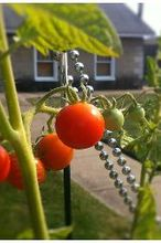 10 great friends veggie garden companion plants, flowers, gardening, Don t leave your tomatoes hanging around defenseless Plant a few of these great companions to help your veggies fend off insects
