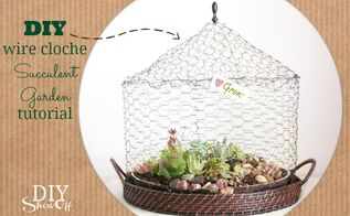 diy wire cloche succulent garden, crafts, flowers, gardening, succulents, terrarium, DIY wire cloche terrarium tutorial