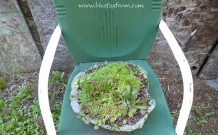hypertufa sag pots, gardening, succulents, Mixed Sempervivum hens and chicks are the perfect planting in the rustic looking flat dish