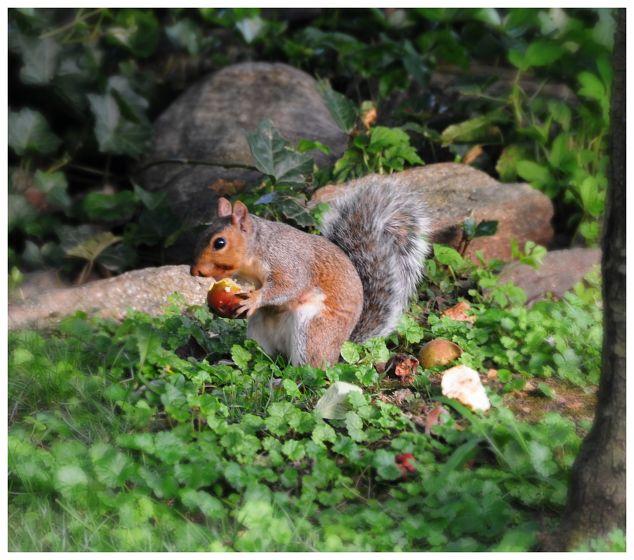 Squirrel Proof Salad Garden Hometalk