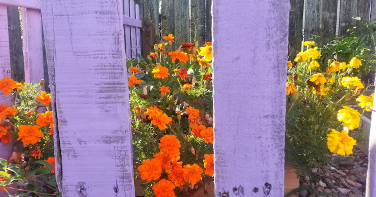 From Pallet To Garden Box >> DIY Pallet Picket Fence | Hometalk