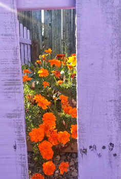 diy pallet picket fence, diy, fences, gardening, how to, painting, pallet, We love the rustic look of the pallet pickets around our little garden