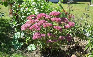 fertilizer, flowers, gardening, perennials