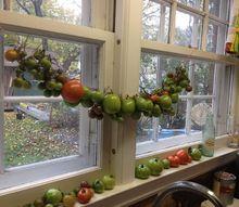tomato garland, gardening