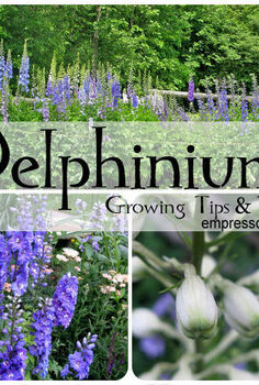 tip for planting delphinium seeds in fall and more, gardening, More tips