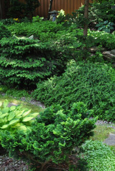 garden tour a beautiful tapestry, flowers, gardening, Here you see a nice mix of perennails evergreens and groundcovers including a Dwarf Hinoki False Cypress in the foreground right a Dwarf Nest Spruce middle of the back row and a Cotton Easter in the back row on the right