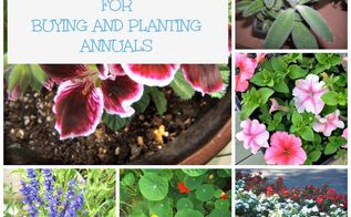 15 tips on buying and planting annuals, container gardening, flowers, gardening