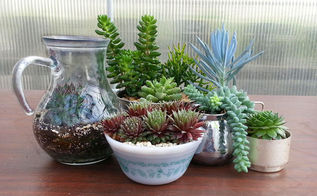 what is your succulent style, container gardening, flowers, gardening, succulents, terrarium