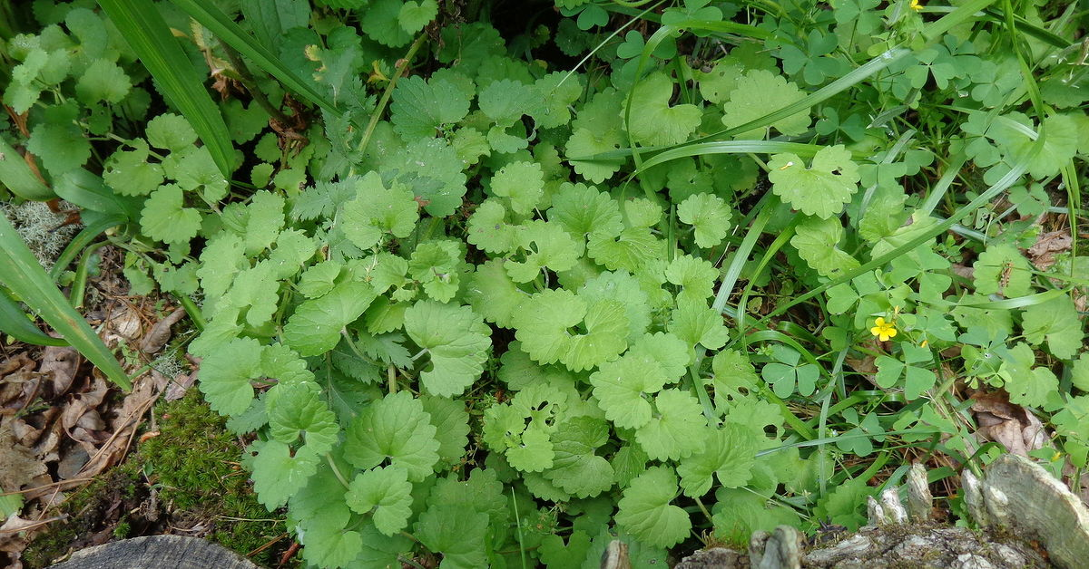 another name this plant question what is it garden plant hometalk