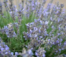 lavender tower, crafts, flowers, gardening