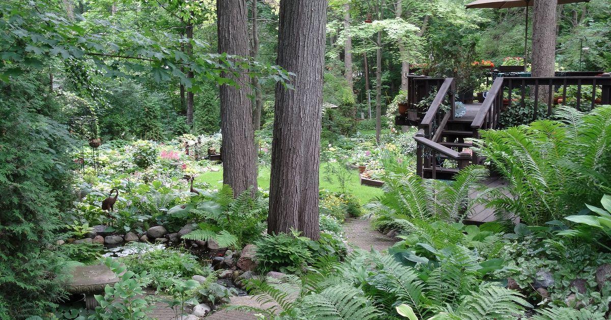 An Early July Backyard Shade Garden Walk In Green Bay Wi Hometalk
