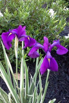 garden favorite, gardening