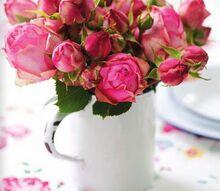 q coffee on roses, flowers, gardening